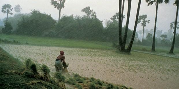 La gente del arrozal