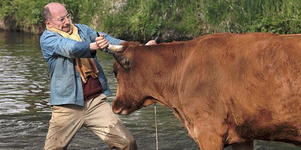 La vaca-1