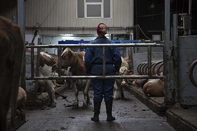 Corrupción entre vacas: Trailer para The County | Cine maldito